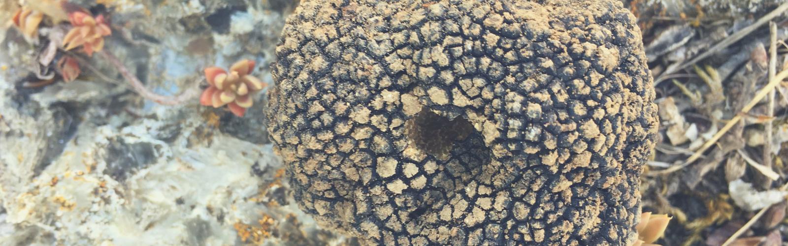 Recherche de truffes au château lagut